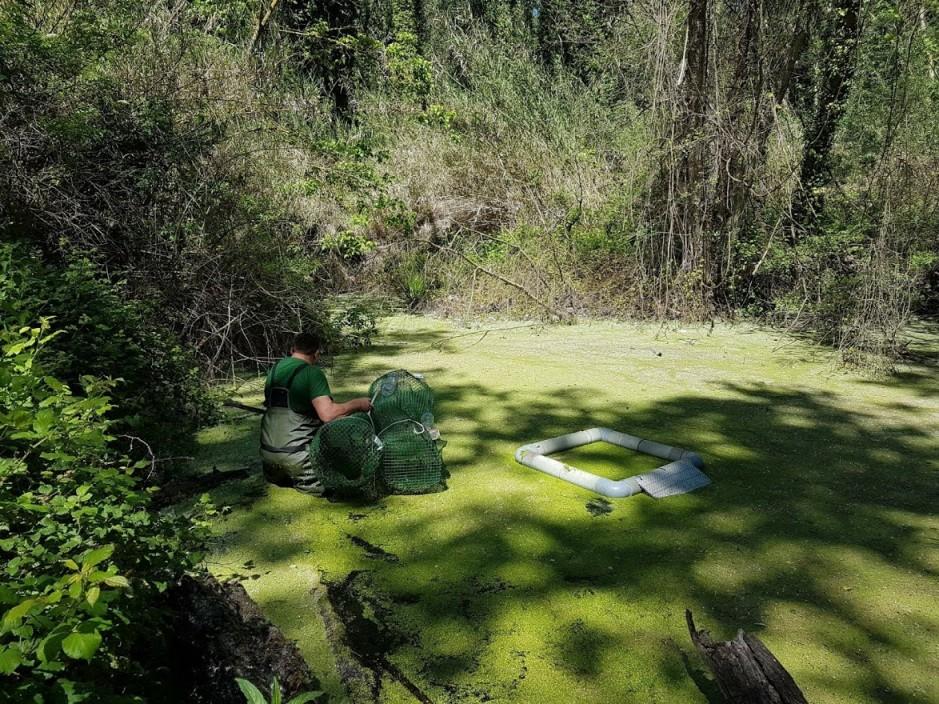 tortuga d'estany alliberats al Riu Ter 1 TotSalt